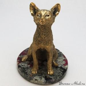 Кот сидит на камне